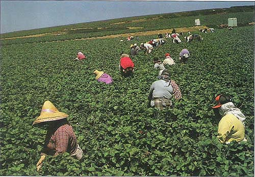 California Wage Law for Farmworkers & Agricultural Laborers