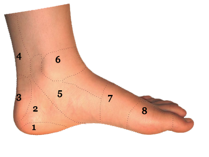 Foot And Ankle Conditions By Area Side View Sol Foot