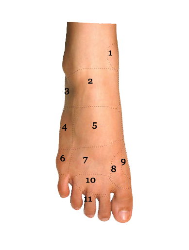 Foot Condition By Area Top Of Foot Foot Pain Diagram